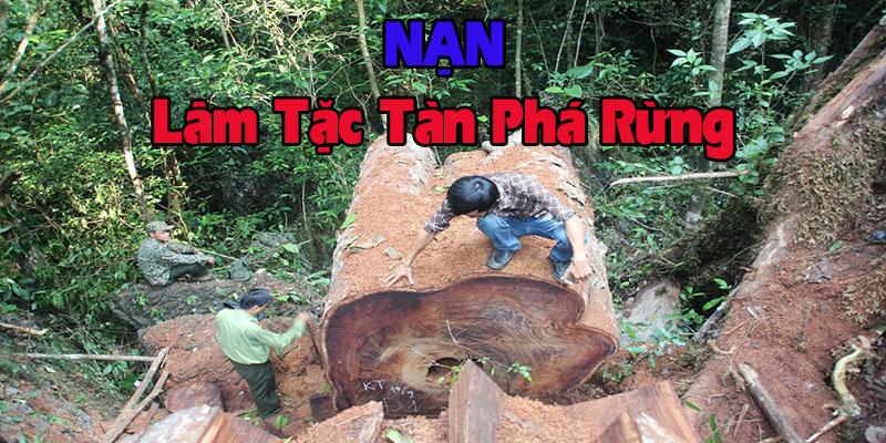 nan-lam-tac-tan-pha-moi-truong